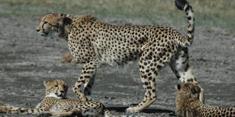 8-Day Botswana Safari