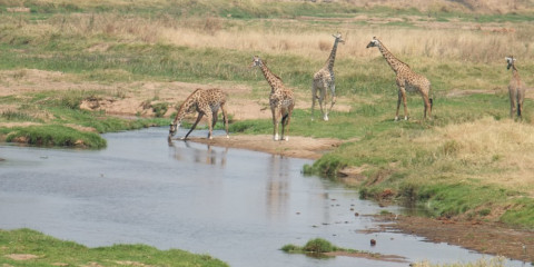 3-Day Last Minute Fly in Midrange Safari to Ruaha N Park