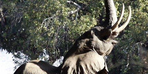 11-Day Exclusive Wildlife Zimbabwe Self Drive