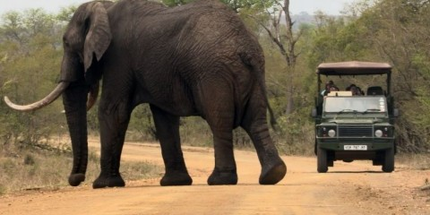 1-Day Private Kruger National Park Game Drive
