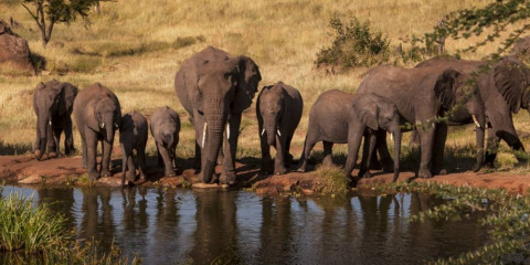 5-Day Northern Tanzania Joining Camping Safari