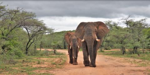 3-Day British Lion Tour Safari - Kaingo Game Reserve