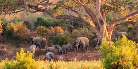 6-Day South Africa Rhino Walking Safari