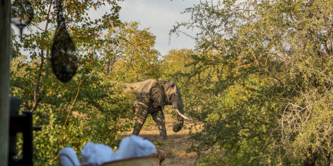 4-Day Nsala Safari Camp Greater Kruger