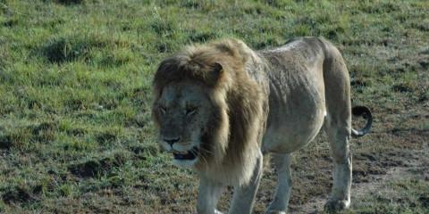 3-Day Best of Tsavo East - West National Park Safari
