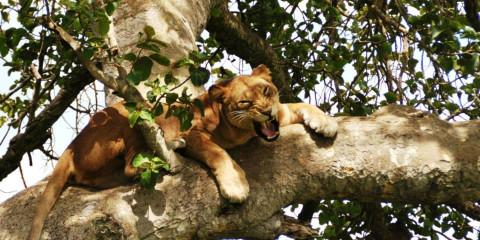 9-Day Uganda Exclusive Fly-in Safari
