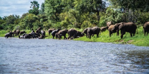 6-Day Magical Victoria Falls and Botswana