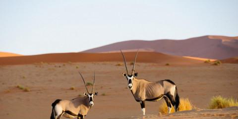 7-Day Self-Drive Around Namibia Mid-Range Tour