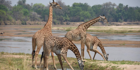 5-Day South Luangwa National Park