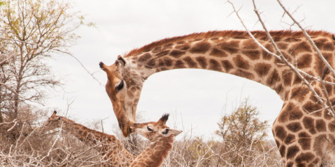 9-Day South Africa Wildlife + Winelands