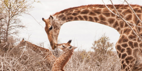 4-Day Kruger Family Safari Experience