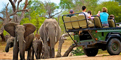 9-Day Best of the Kruger Safari
