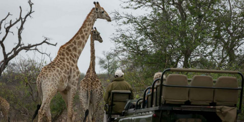 3-Day Kruger NP and Panorama Route Mid-Range Safari