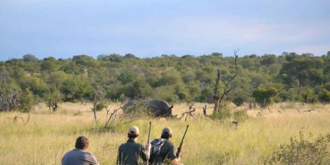 3-Day Kruger, Sabie Sands and Panorama Mid-Range Safari