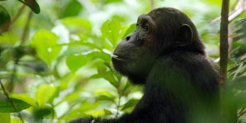 11-Day South Tanzania Fly-in: Selous, Ruaha&Mahale Chimps
