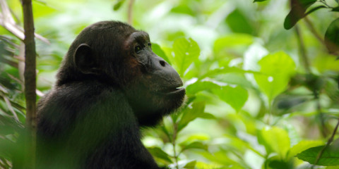 7-Day Serengeti Canvas & Mahale Chimpanzee Safari