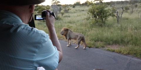 ½-Day Kruger Game Drive