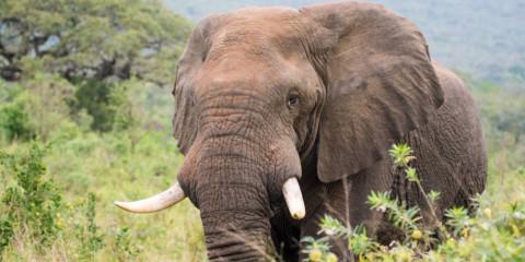 4-Day Greater Kruger Safari with Makalali River Lodge