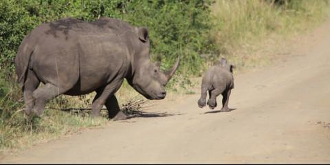 18-Day Kruger, Swaziland, Kwa-Zulu Natal & Drakensberge