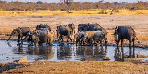 8-Day Zimbabwe Safari