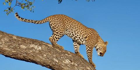 3-Day Moremi/Khwai Camping Safari and Delta Cruise