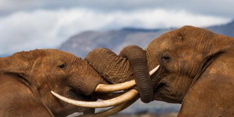 4-Day Safari from Diani to Tsavo and Amboseli Kenya