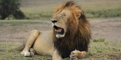 9-Day Wild Wonders of Kenya Safari