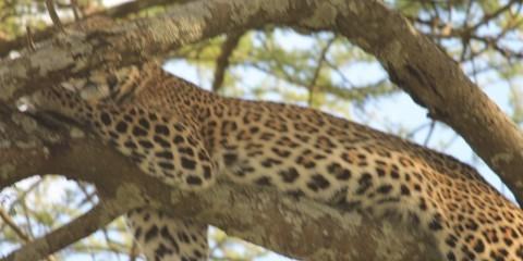 4-Day Nakuru/Maasai Mara Safari