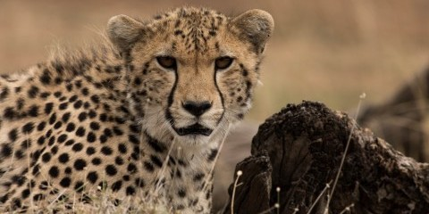 7-Day Best of Kenya Wildlife Encounters Safari