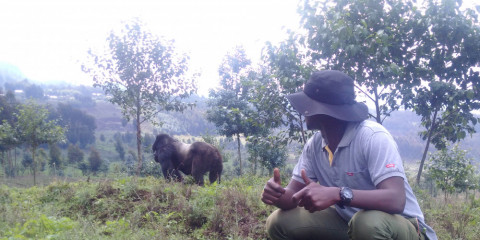 3-Day Rwanda Gorilla and Golden Monkeys