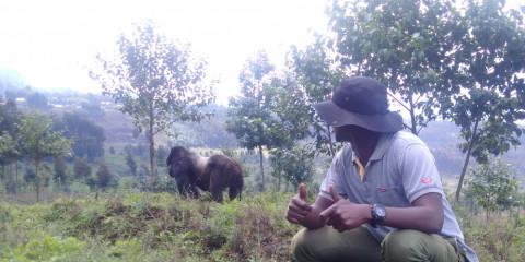 3-Day Rwanda Gorilla and Golden Monkeys