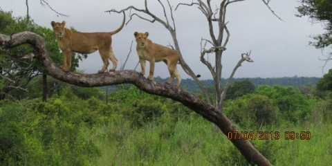 3-Day Drive in Budget Wildlife Safari Mikumi N Park
