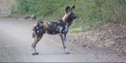 4-Day Greater Kruger Safari with Makalali Main Lodge