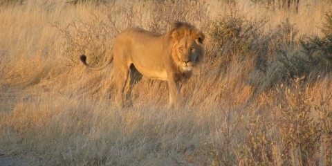 17-Day Kalahari, Delta & Big Game - Camping Group