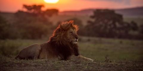 Solaris Tours And Safaris