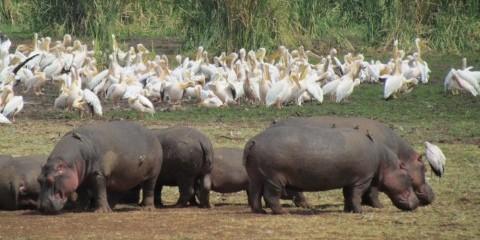3-Day Last Minute Drive in Safari to Ngorongoro Crater