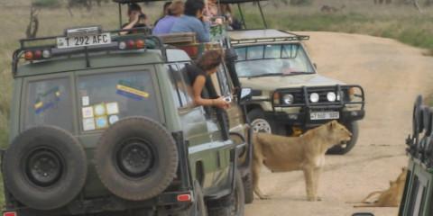 12-Day Lake Natron Serengeti Migration & Zanzibar Leisure