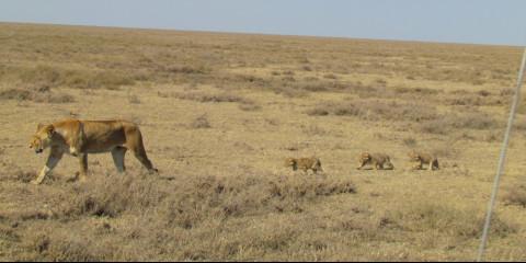 3-Day Mid-Range Fly in Safari to Serengeti NP