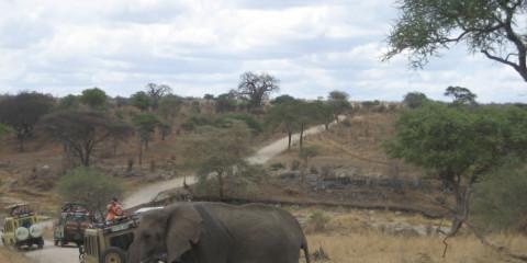 7-Day Big5 Sharing Camping Safari Adventure to Serengeti