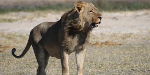 11-Day Marvelous Safari Trip