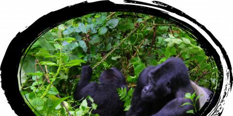 4-Day African Gorilla Safari Experience