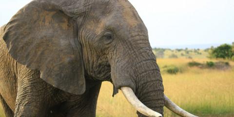 6-Day Amboseli L Naivasha /Nakuru Masai Mara Elementaita