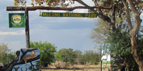3-Day Wonderful Camping Safari to Mikumi National Park