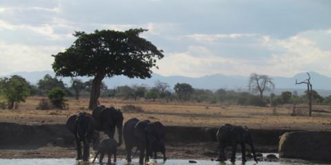 5-Day Budget Marvellous Safari to Selous GR & Mikumi NP
