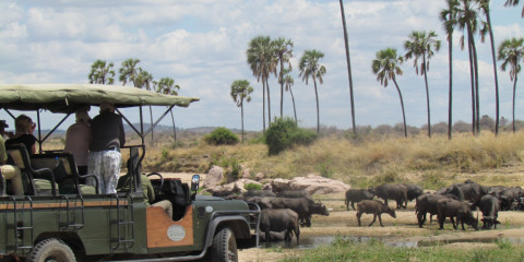 3-Day Fly in Fly out Midrange Safari to Ruaha NP