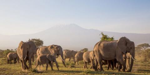 4-Day Kenya Tsavo Amboseli Elephant & Kilimanjaro Safari