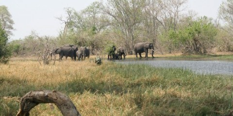 7-Day Budget Mobile Safari Through Botswana