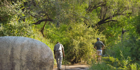 4-Day Thornybush Chapungu Tented Camp - Greater Kruger