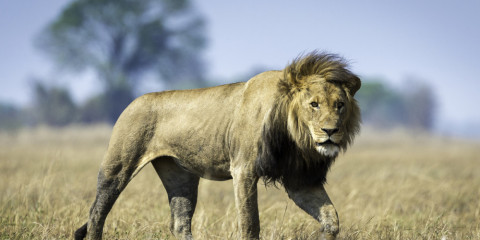 7-Day Zambia Kafue & Livingstone Luxury Safari