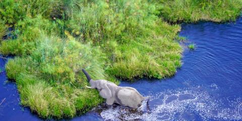 8-Day Botswana Highlights